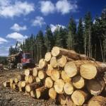 Nepovratna sredstva za podjetja v lesni industriji