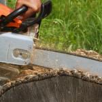 Razpisi v gozdarstvu in prvi obdelavi lesa